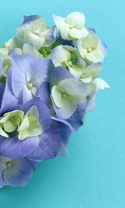 Purple flowers Windows Phone Wallpaper