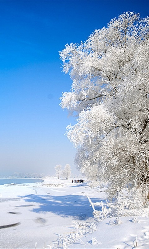 Snow Tree II Windows Phone Wallpaper