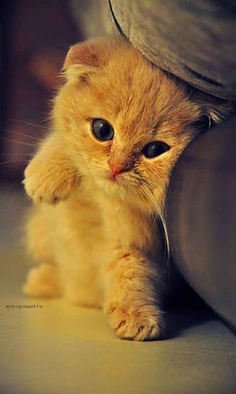 Kitty Cat Windows Phone Wallpaper