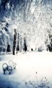 Snowy Park II