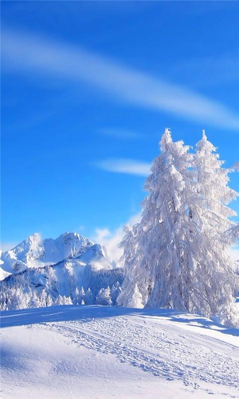 Winter Landscape Windows Phone Wallpaper