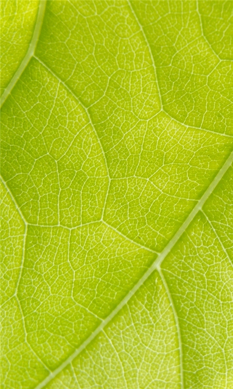 Green Leaf Windows Phone Wallpaper