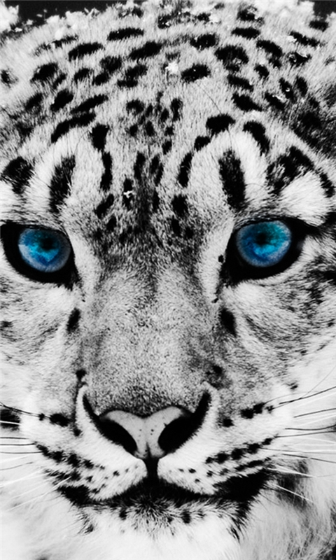 Snow Leopard Windows Phone Wallpaper