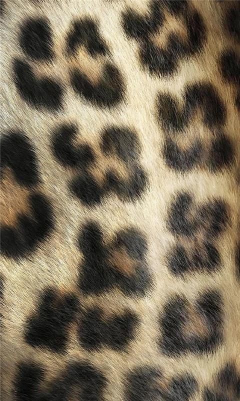 Leopard Skin Windows Phone Wallpaper