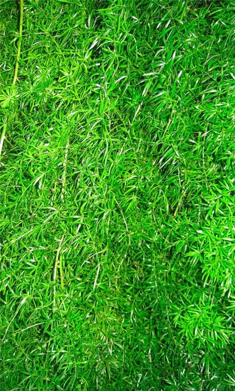 Grass Windows Phone Wallpaper