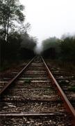 Trees Railroad Tracks