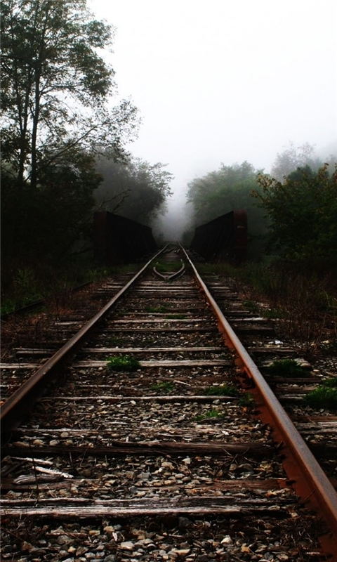 Trees Railroad Tracks Windows Phone Wallpaper