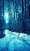 Winter Trees Roads