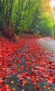 Rainy Autumn Forest