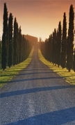 Trees Italy Roads