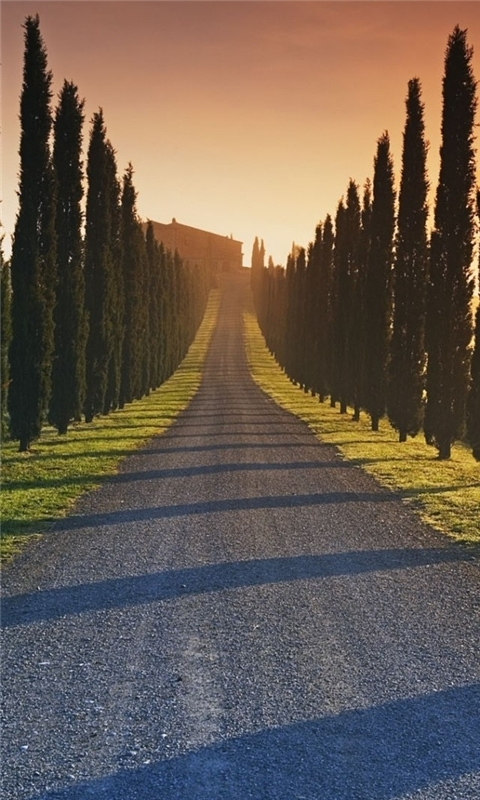 Trees Italy Roads Windows Phone Wallpaper