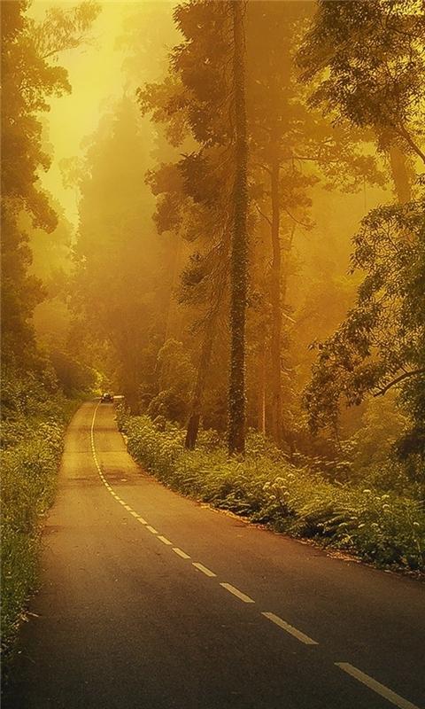 Fog forest road Windows Phone Wallpaper