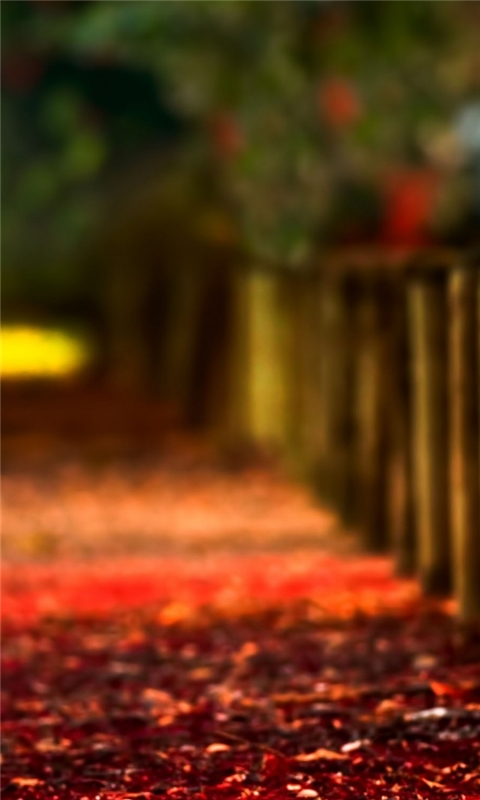 Autumn Fence Windows Phone Wallpaper