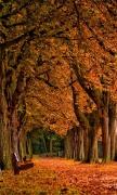 Park Autumn