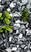 Plants Between The Stones