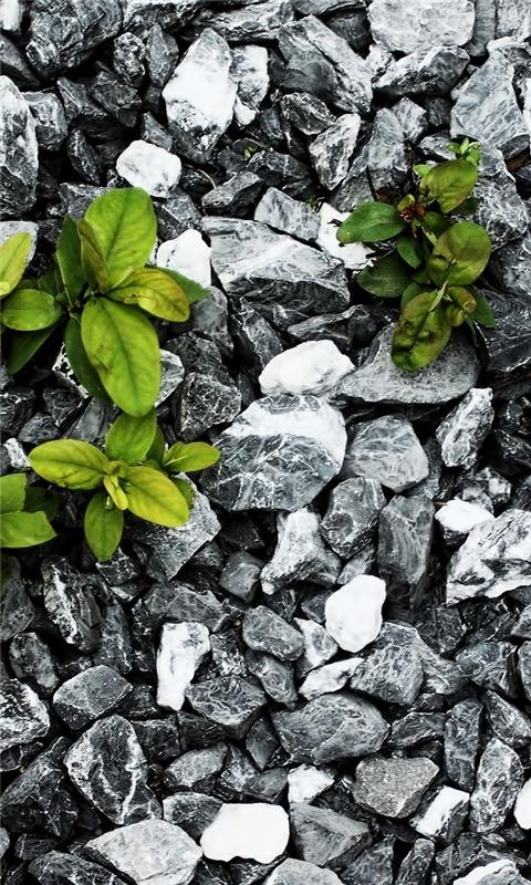 Plants Between The Stones Windows Phone Wallpaper