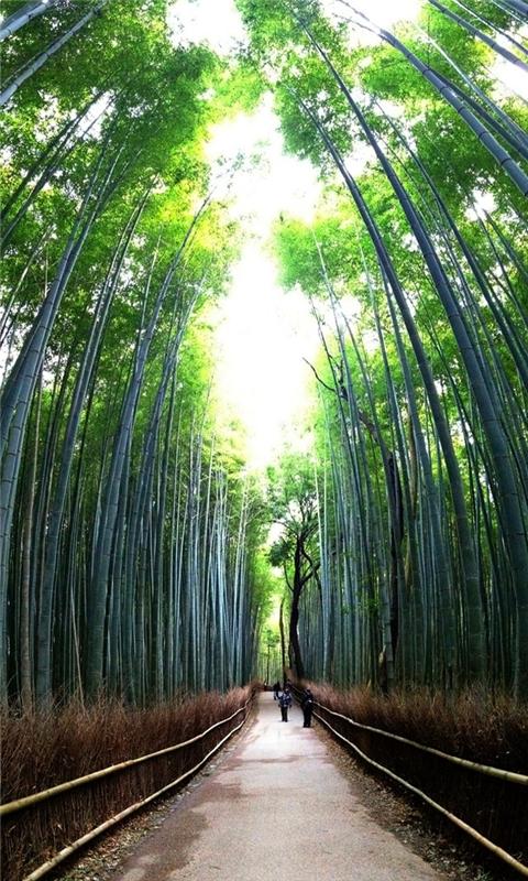 Bamboo forest Windows Phone Wallpaper
