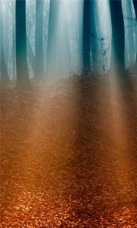 Autumn Forest 5 Windows Phone Wallpaper