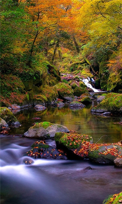 Forest Creek Autumn Windows Phone Wallpaper