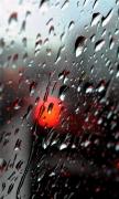 Fresh Rain Drops