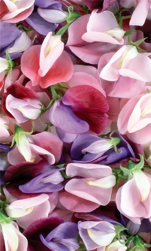 Purple And Pink Flowers Windows Phone Wallpaper