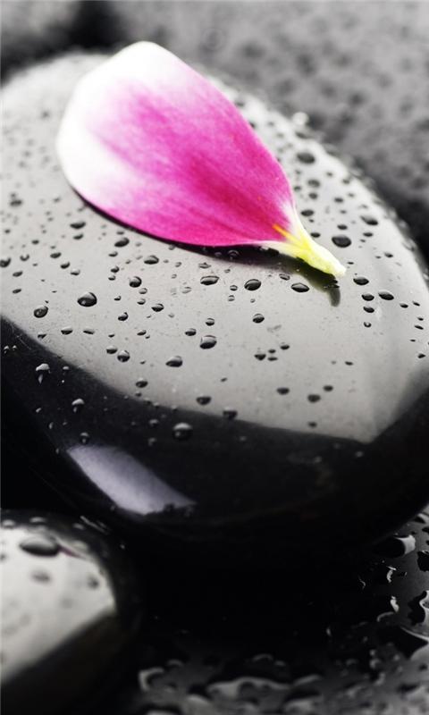 Stone Flower Windows Phone Wallpaper