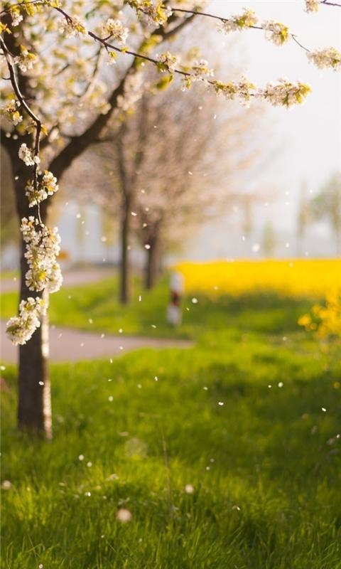 Raining Petals Windows Phone Wallpaper