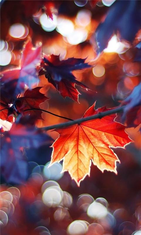 Autumn Leaves Windows Phone Wallpaper