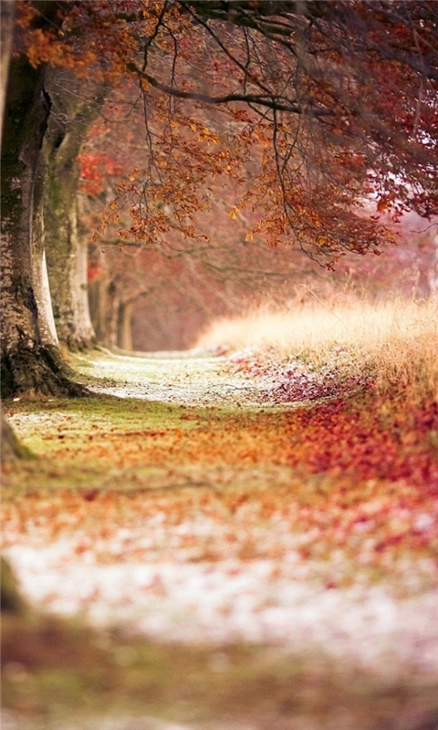 Forest Trees Path Fallen Leaves Windows Phone Wallpaper