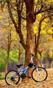 Bike In The Park