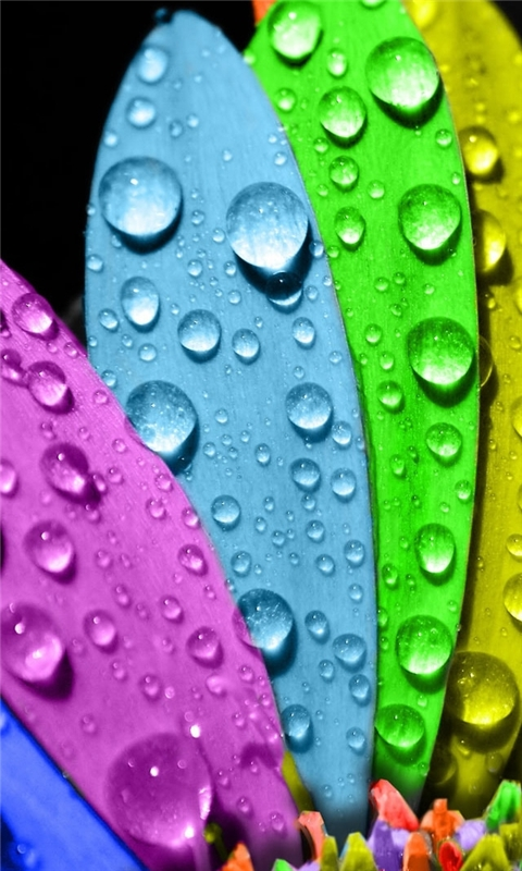 Colorful Flower Windows Phone Wallpaper