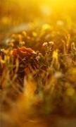 Dusk grass