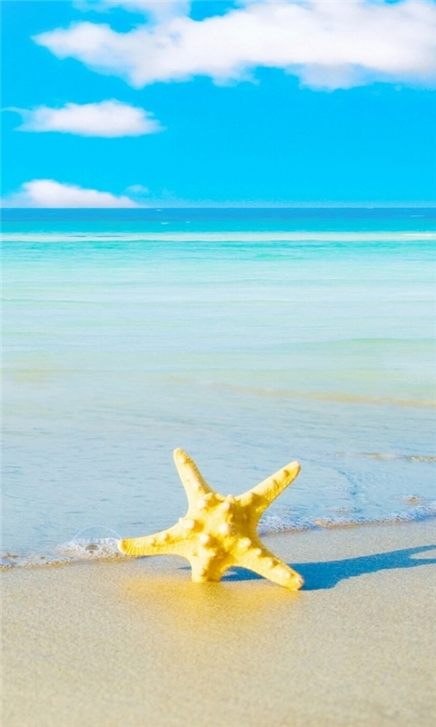 Starfish On The Beach 5 Windows Phone Wallpaper