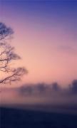 Scots mist