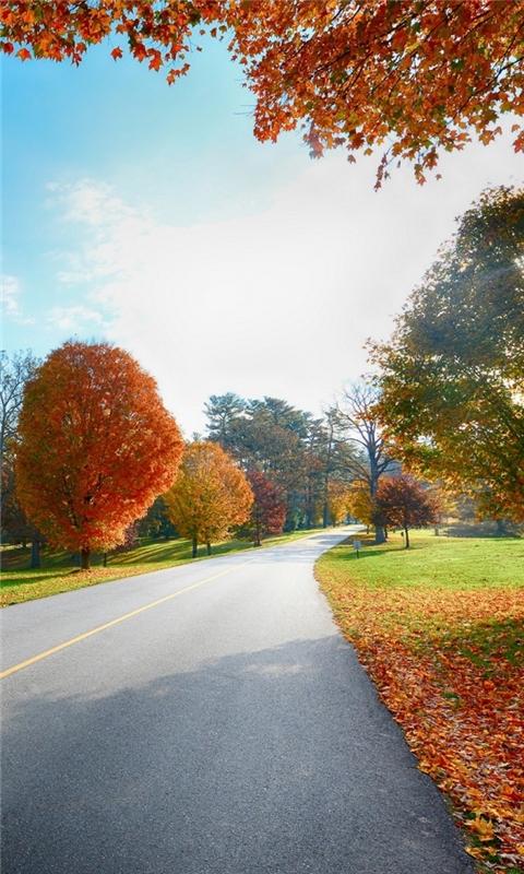 Autumn Tree road landscape Windows Phone Wallpaper