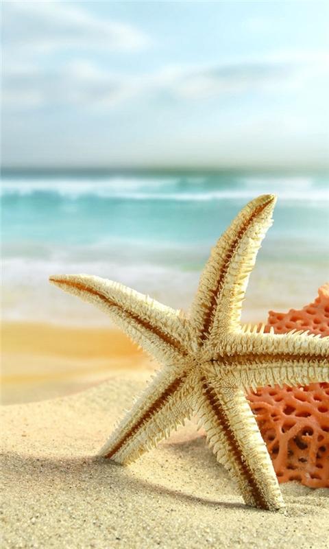 Starfish on the beach Windows Phone Wallpaper