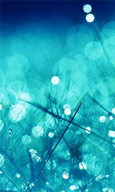 Rain Grass Bokeh Water Windows Phone Wallpaper