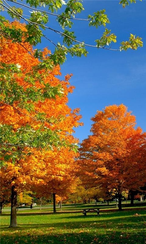 Autumn in the park Windows Phone Wallpaper