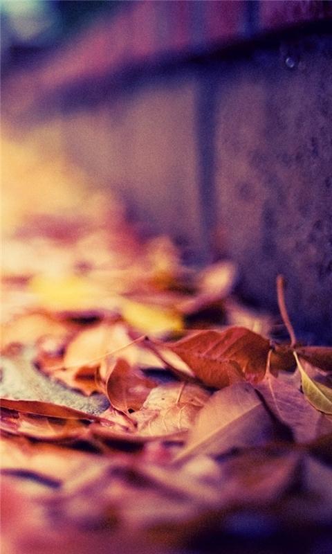 Leaves On The Street Windows Phone Wallpaper