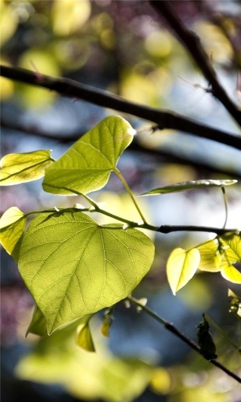Tree Leaves Bokeh Windows Phone Wallpaper