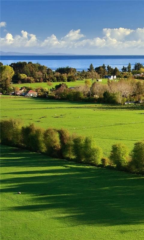 Amazing Green Landscape Windows Phone Wallpaper