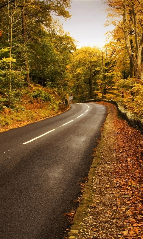 Autumn Road 2 Windows Phone Wallpaper