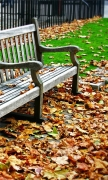 Bench and deciduous