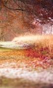 Beech Autumn Trees