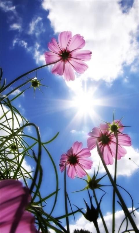 Beautiful Day Windows Phone Wallpaper