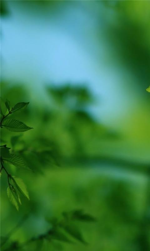 Green Tree Windows Phone Wallpaper