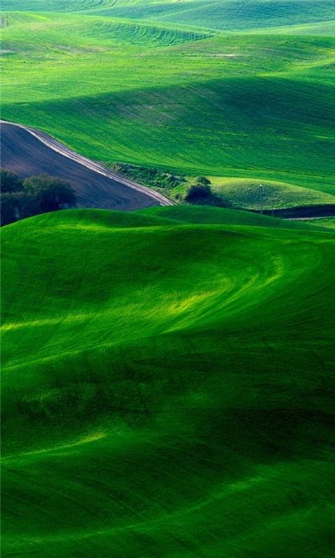 Dreamy Green Fields Windows Phone Wallpaper