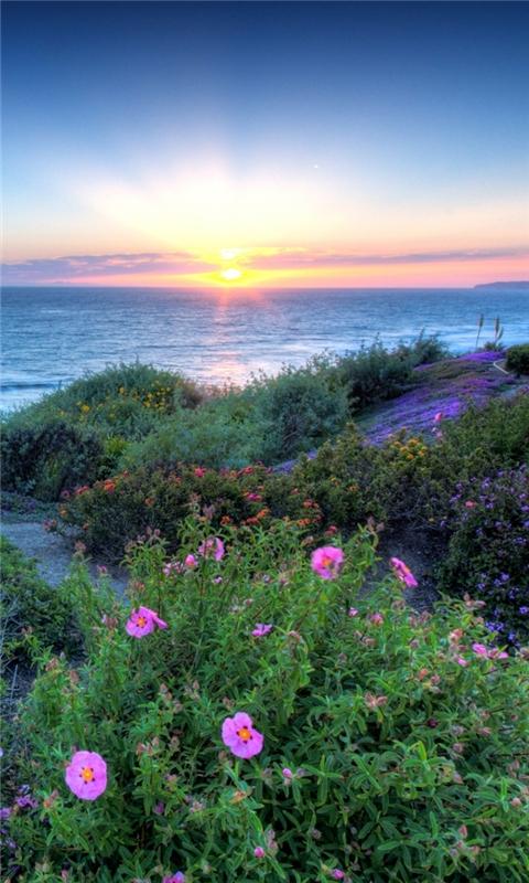 Pacific sunset Windows Phone Wallpaper