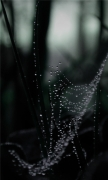 Dew On Spider Web Macro