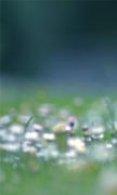 Dandelion Seedhead Isle Of Wight